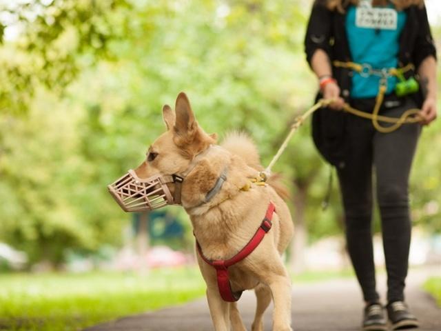 43731 В регионах ввели новые штрафы за прогулку с собакой