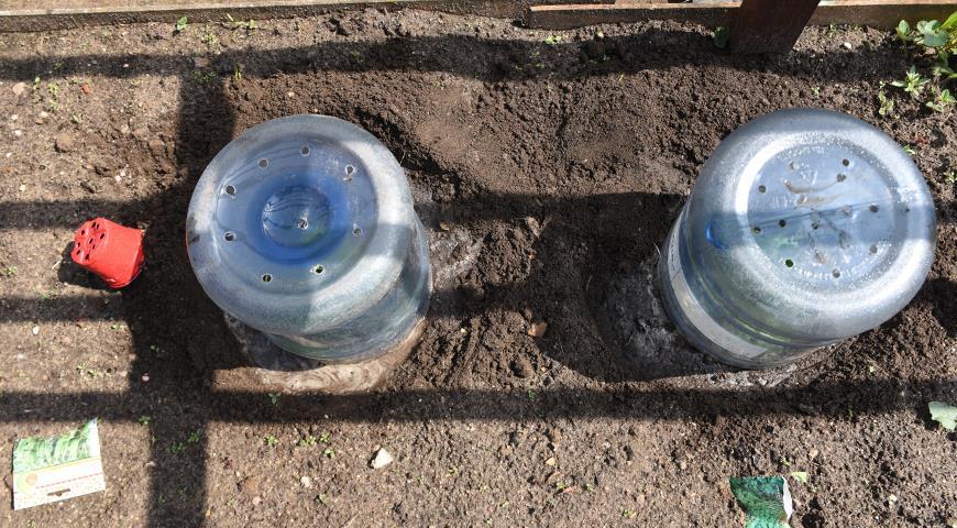 Пора сажать вкусные мини-арбузики – мелотрию на рассаду