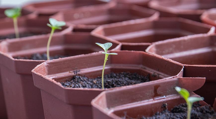 Лучшие препараты для работы с рассадой: советы профессионалов