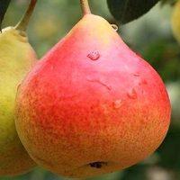 44859 9 лучших фруктов при преддиабете и диабете, а также при избыточном весе