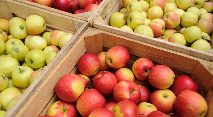 45963 5 лучших способов хранения яблок на зиму