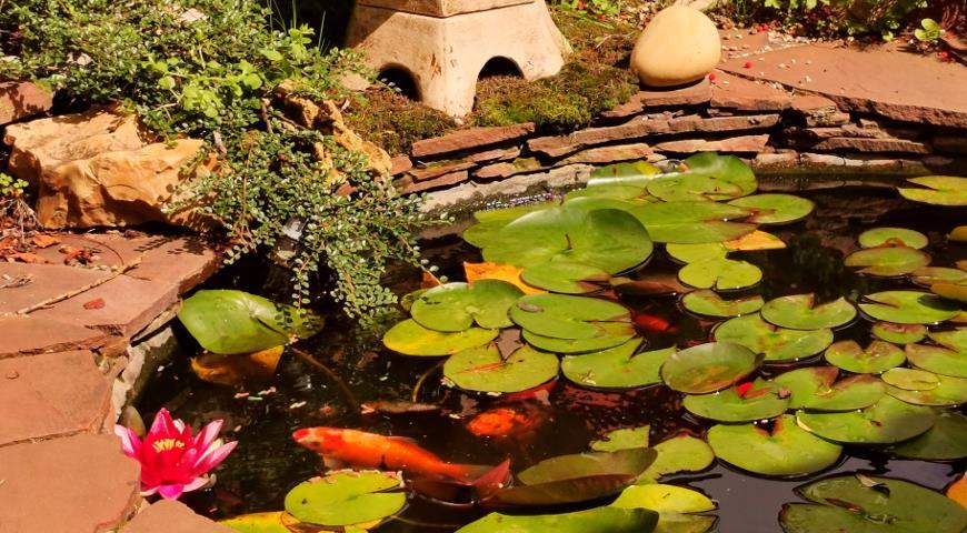 Водоем с кувшинками в китайском саду