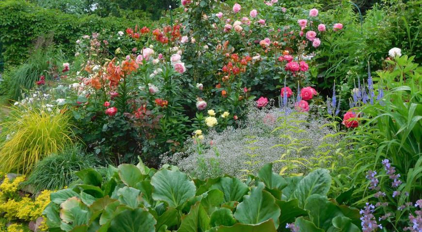 розарий, вероника, бадан, лилия, сад Китовой