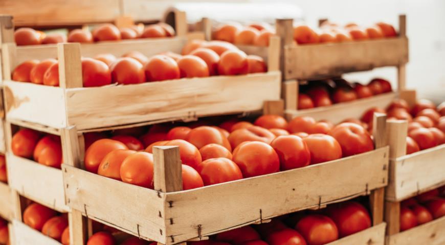 Хранение томатов в ящиках
