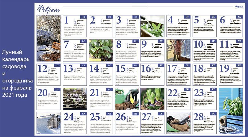 Лунный календарь садовода и огородника на февраль 2022 года