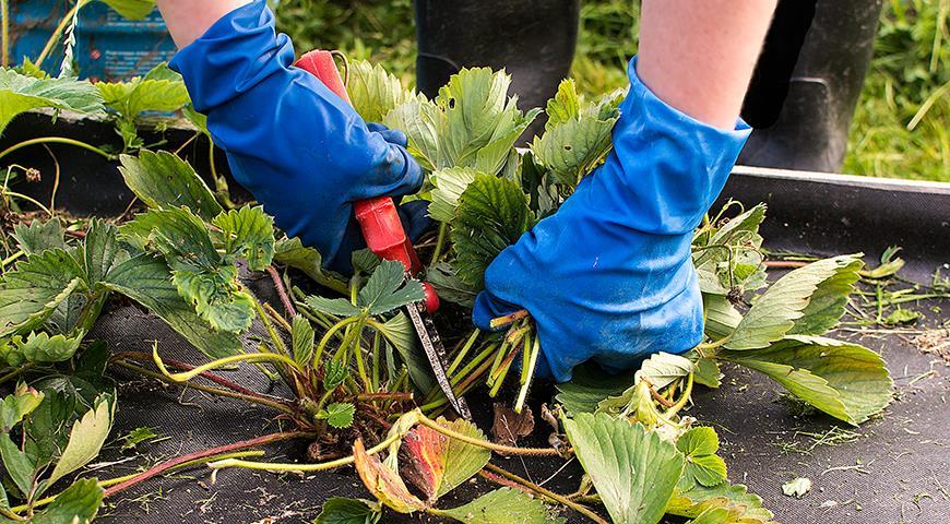 45607 Осенняя обрезка цветника: какие растения надо обрезать в зиму?