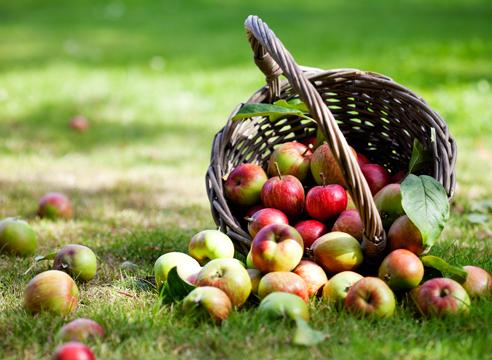 Сад: сезонные работы в сентябре