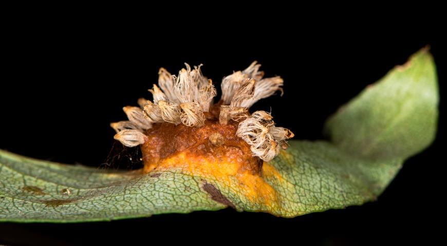 Борьба с болезнями сада: план осенних обработок яблонь, груш, слив, смородины и др. плодовых культур