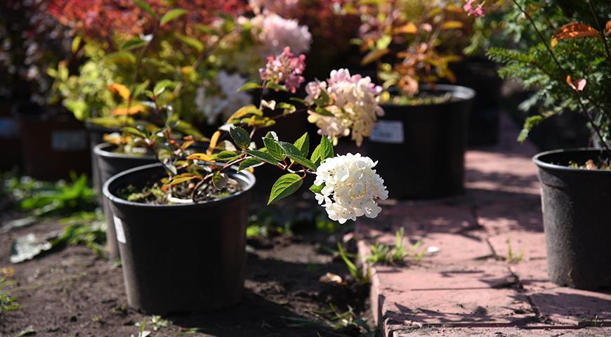 Какие растения лучше всего покупать осенью
