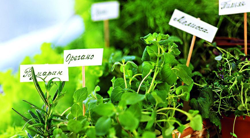Лучшие дачные растения, которые можно выкопать и выращивать зимой дома