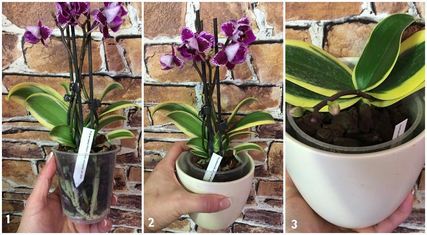 46725 Как правильно поливать орхидеи: советы Елены Костровой, коллекционера редких растений