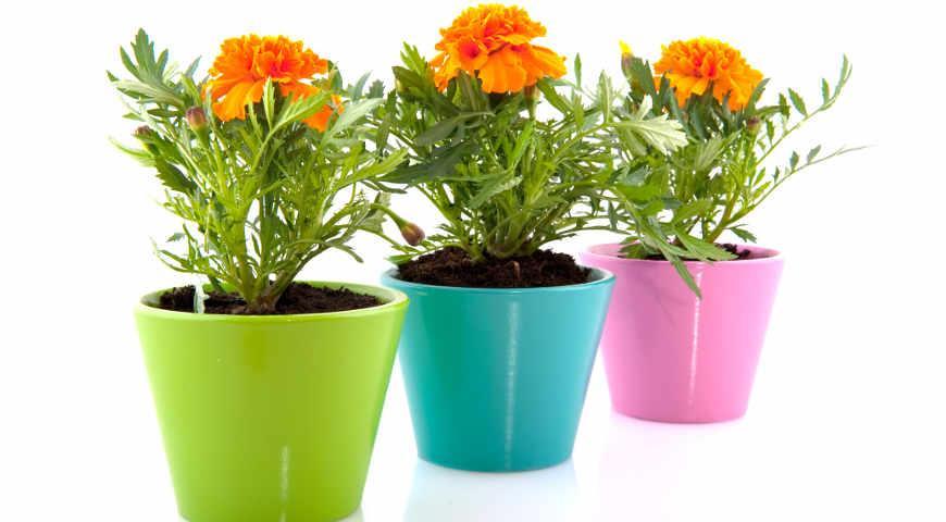 46596 Лучшие дачные растения, которые можно выкопать и выращивать зимой дома