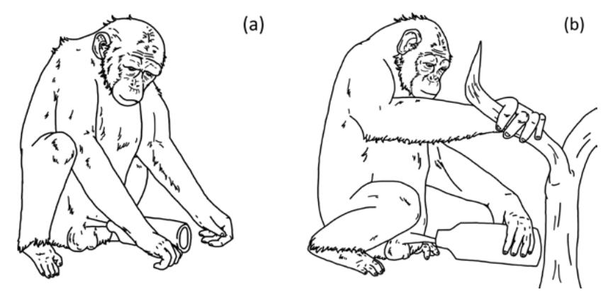 Шимпанзе впервые застали за использованием орудий в половых целях