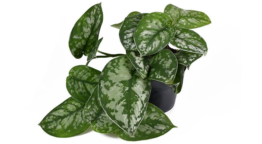 Комнатные растения для северных окон: полный список