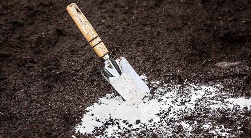 Удобрения с кальцием: зачем почвам и растениям нужен кальций?