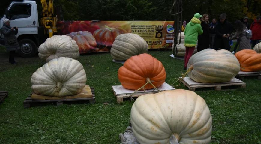 46903 Как вырастить гигантскую тыкву и что для этого нужно сделать уже этой осенью