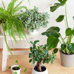 46805 Комнатные растения для северных окон: полный список