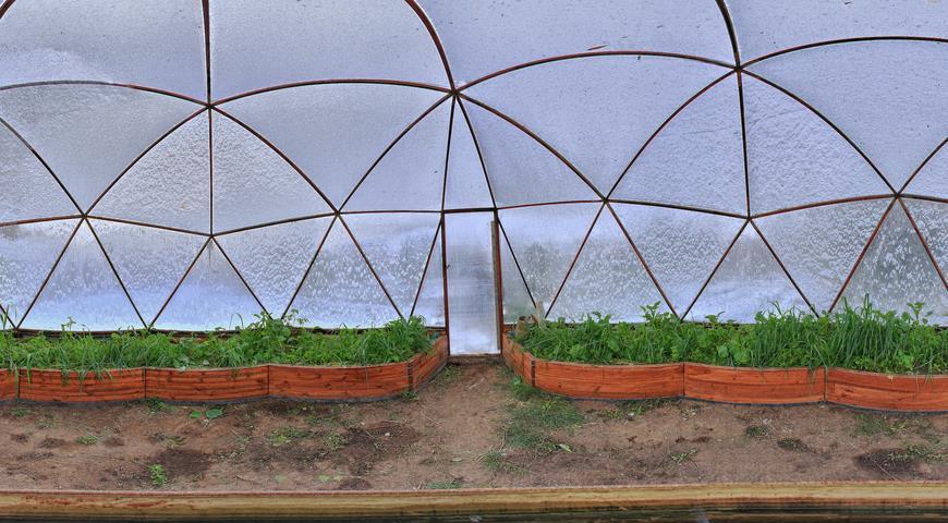47212 Лучшие сидераты для посева в теплицу осенью и под зиму