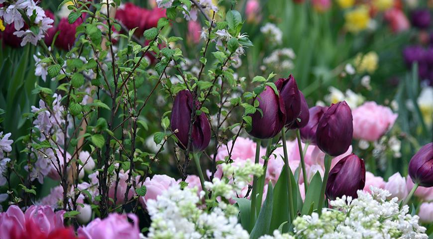 47279 Миллиарды на тюльпаны: в Москве не поскупились