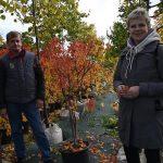 46974 Осенние посадки деревьев и кустарников: что сажать, а что отправить в прикоп?