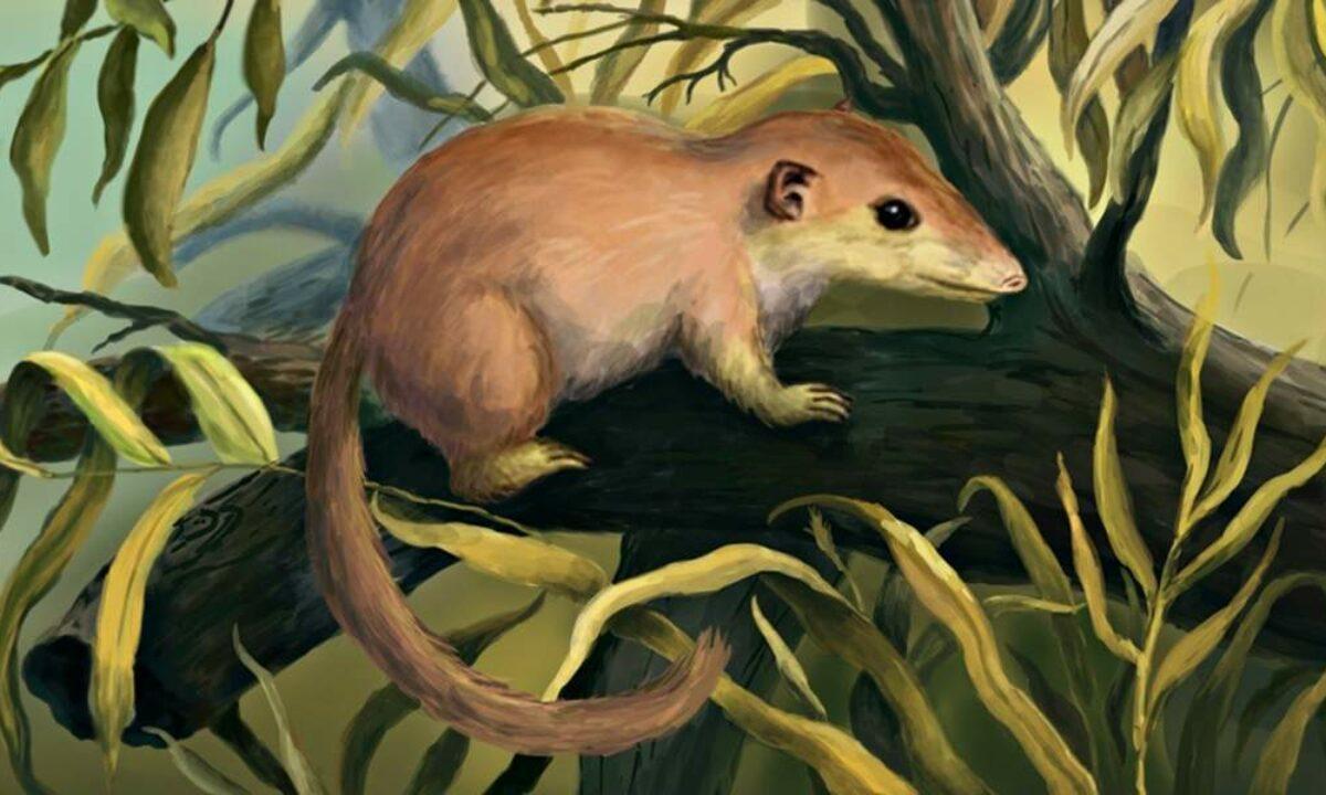 47039 Предки приматов могли слезть с деревьев после падения астероида 65 миллионов лет назад
