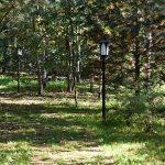 46776 Самые красивые сады России: У леса на опушке