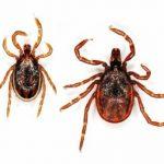 46870 В Японии зарегистрировали случаи заражения ранее неизвестным ортонайровирусом
